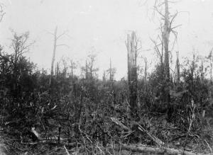 Trones Wood 10/8/1916 IWM Q861